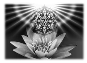 The Lotus is a symbolic representation of Karma because it carries its seeds within itself.